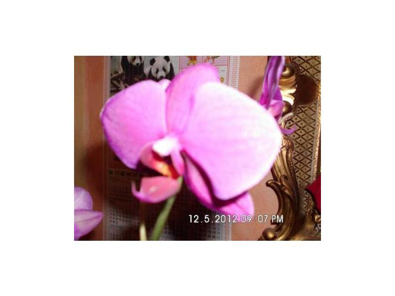 seramis spezial substrat f r orchideen preisvergleich testberichte und g nstige angebote bei. Black Bedroom Furniture Sets. Home Design Ideas
